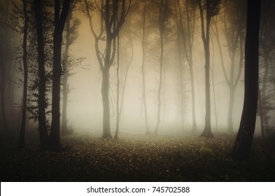 autumn in forest, misty landscape