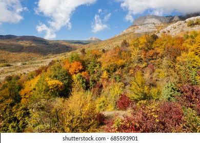 Autumn forest in mountains in Crimea peninsula