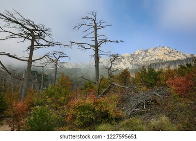 Autumn forest and mountains in light fog