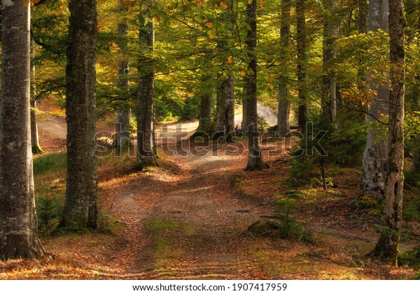 Autumn forest in the mountains, warm colors
