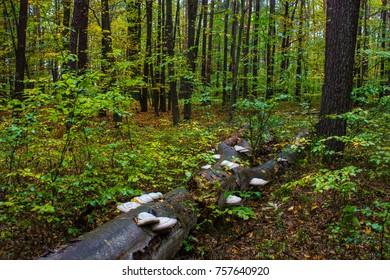 Autumn forest, mushrooms grow on a tree. Beautiful autumn.