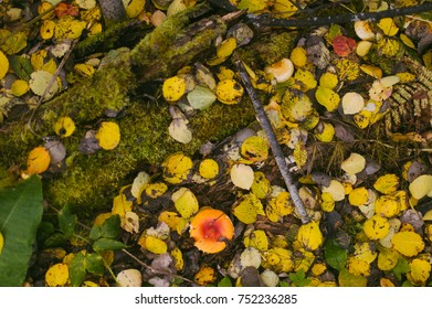 autumn in the forest. mushrooms and yellow leaves