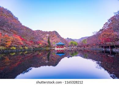 Autumn forest of Naejangsan National Park,South Korea.
