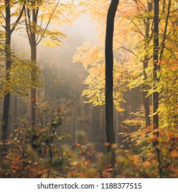 Autumn forest natural landscape sun light misty scenery in north Poland.