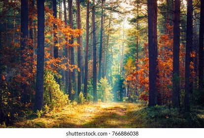 Autumn forest nature. Vivid morning in colorful forest with sun rays through branches of trees. Scenery of nature with sunlight - Shutterstock ID 766886038