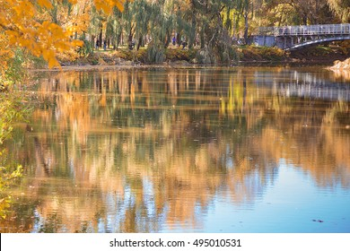Autumn forest near the lake with yellow leaves. Bright autumn