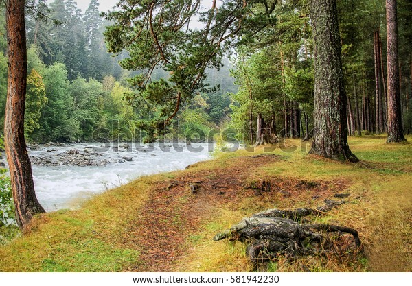 Autumn forest near the river