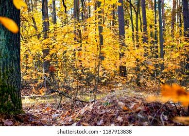 Autumn forest. Non urban scene.