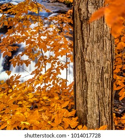 Autumn in the forest, Northeast United States