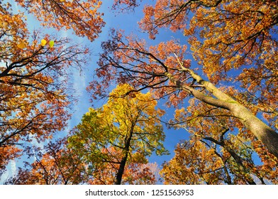 autumn forest  october trees nature background