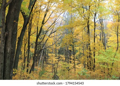 Autumn forest in October yellow and gree foliage