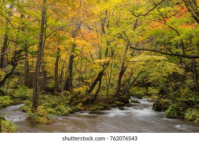 Autumn Forest of Oirase Stream in Aomori, Japan