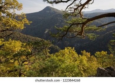 Autumn forest on the background of mountains in the Guam gorge of the Krasnodar region