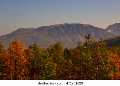 Autumn forest on a background of mountains