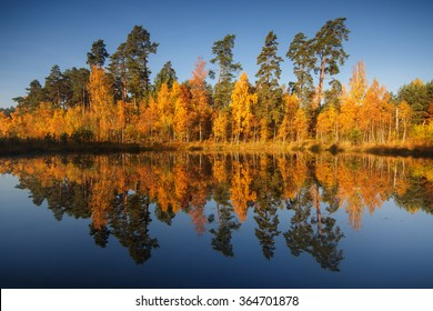 Autumn in the forest on the lake