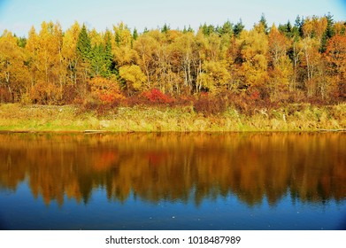 Autumn forest on the river
