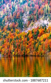 Autumn forest on the steep slopes of the alpine mountains. wonderful landscape