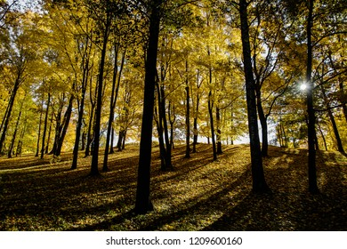 Autumn forest on a sunny day. Hope. Bright sunshine in a golden forest.