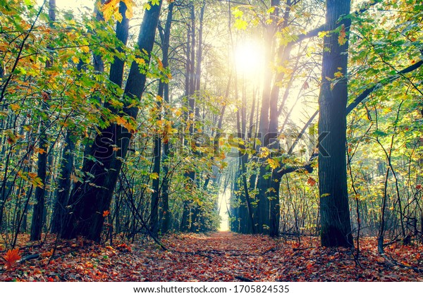 Autumn forest on a sunny day. Autumn in the park.