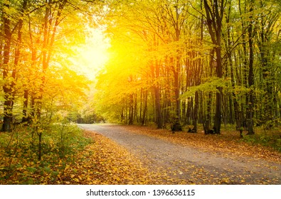 Autumn forest on sunset. Beautyful autumn landscape.