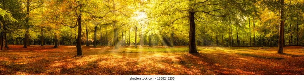 Herbstwaldpanorama auf Sonnenlicht