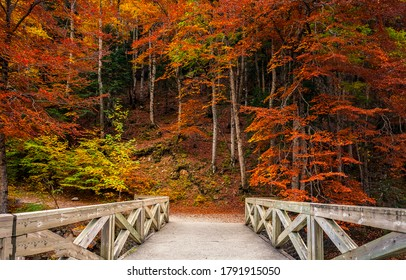 Autumn forest park bridge way. Wooden bridge in autumn forest park. Autumn forest bridge view