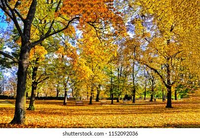 Autumn forest park landscape. Golden autumn park bench view. Autumn forest park panorama