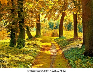 autumn in forest path