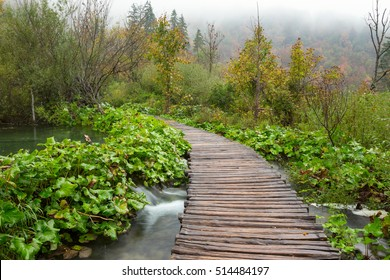 Autumn forest pathway in plitvice national park-Croatia