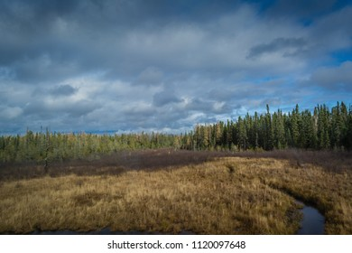 Autumn forest with peat territory