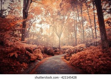 Autumn forest - Picture taken at singapore botanical garden