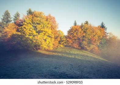 Autumn forest in Pieniny mountains, Poland