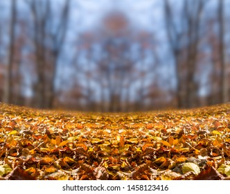autumn forest with red dry leaves