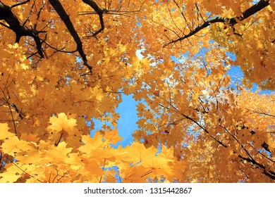 autumn forest, red and yellow leaves, blue sky