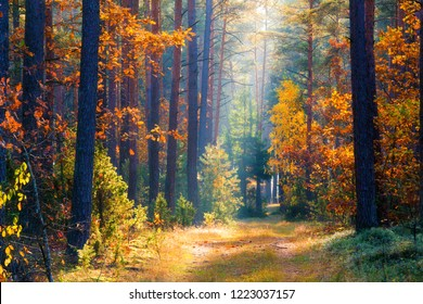 Autumn forest with red yellow trees and colorful foliage. The sun illuminates the forest path through mist. Picturesque forest. Beautiful fall background.