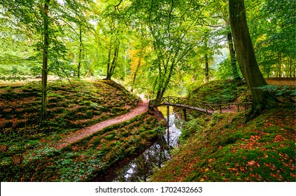 Autumn forest river creek landscape. Forest creek in autumn. Autumn forest creek view
