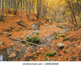 Autumn in forest and river flow. Nature composition.