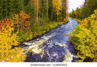 Autumn forest river landscape. Forest river flow in autumn season. Autumn river in autumn forest panorama