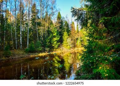 Autumn forest river landscape. Forest river in autumn season. Autumn forest river view. Autumn forest river reflection