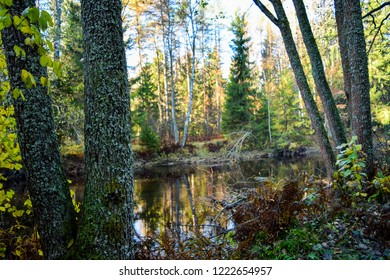 Autumn forest river scene. Forest river trees in autumn view. Autumn forest river trees