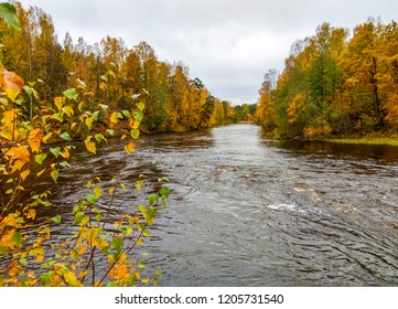 Autumn forest river view. Golden autumn forest river flow landscape. Autumn forest river panorama. Forest river in autumn season