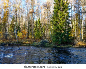 Autumn forest river view. Wild river in autumn forest landscape. Autumn forest river flow. Autumn forest river water scene