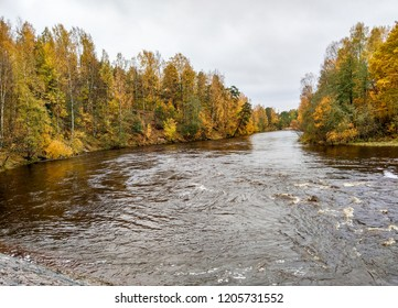 Autumn forest river water landscape. Golden autumn forest river panorama. Forest river in autumn season. Autumn forest river view