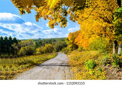 Autumn forest road landscape. Golden autumn forest road panorama. Autumn forest road view