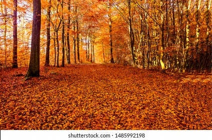 Autumn forest road leaves fall in ground landscape on autumnal background in November - Shutterstock ID 1485992198