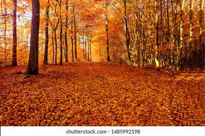 秋の森の道が見える。紅葉が散る。秋の森の道の風景。秋の葉のロードビュー
