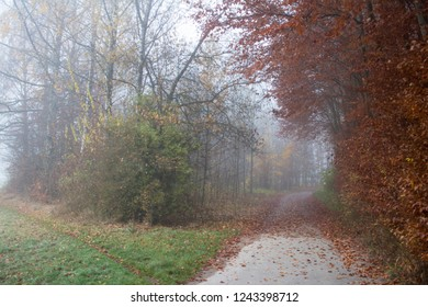 autumn forest road on a foggy morning