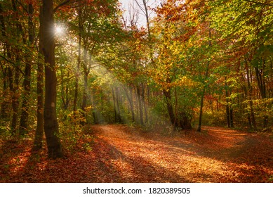 autumn forest road with sunlight
