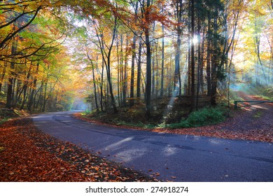 Autumn forest road in the woods, Poland , Ojcow, National Park.