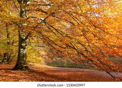 An autumn forest scene in Jutland, Denmark.